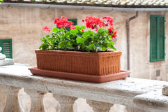 Flower pot on the balcony Royalty Free Stock Photography
