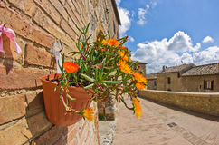 Flower pot on a brick wall at one of the streets of San Gimignano Stock Images