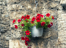 Flower pot with bright flowers. Montenegro. Budva. Flower pot with bright flowers on a background of a stone old wall on a sunny summer day Royalty Free Stock Images