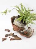 Flower pot broken Royalty Free Stock Images