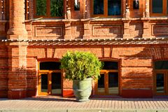 A flower pot with a bush of a tree stands at the red brick wall of an old house Stock Image