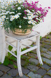 Flower pot on chair. View on colerfull flowers on old weatherd chair Stock Photo