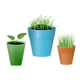 Flower pot Stock Image