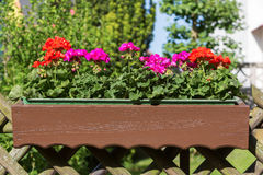 Flower pot Royalty Free Stock Photography
