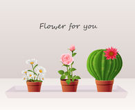 Flower in pot Stock Images