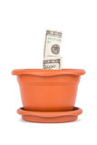 Flower Pot and Dollar Bills Royalty Free Stock Images