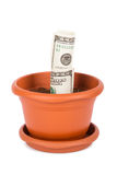Flower Pot and Dollar Bills Stock Photo