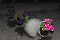 Flower pot. Flowerpots night dark gray style flowerbed pink purple pitcher earth Stock Photography
