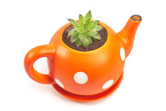 Flower pot in form of teapot with houseleek isolated Stock Photography