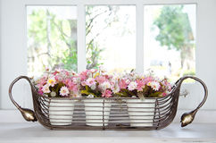 Flower pot in front of a window. Stock Image