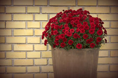 Flower pot front of yellow brick wall Stock Photos