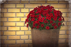 Flower pot front of yellow brick wall and old photo paper effect Stock Photos