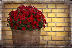 Flower pot front of yellow brick wall and old photo paper effect Royalty Free Stock Image