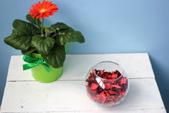 Flower in a pot and a glass vase with rose petals Stock Photo