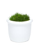 Flower pot with grass Stock Image