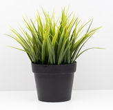Flower Pot , grass pot Royalty Free Stock Images