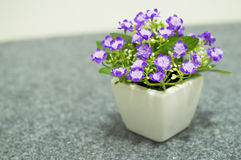 Flower in pot Royalty Free Stock Images
