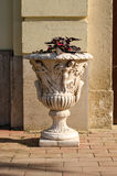 Flower pot. Royalty Free Stock Image