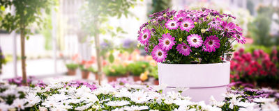 Flower pot in Greenhouse with copy space Stock Photos