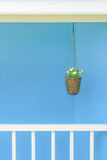 Flower pot hanging with blue wall Royalty Free Stock Photos