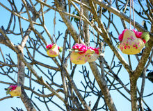 Flower pot hanging on tree Stock Photography