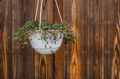 Flower pot hanging on the wall Royalty Free Stock Photos