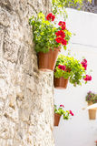 Flower pot hanging from a wall Royalty Free Stock Photography