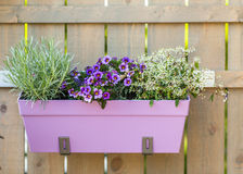 Flower pot hanging on wooden fence Stock Images