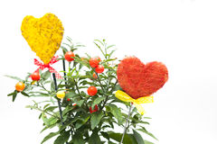 Flower pot and hearts Stock Images