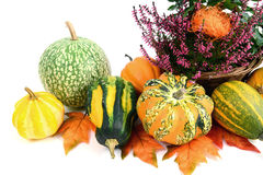 Flower pot of heather with mini pumpkins on isolated white backg Stock Images