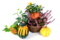 Flower pot of heather with mini pumpkins on isolated white backg Royalty Free Stock Photos