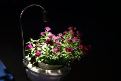 Flower pot in Ho Chi Minh City. A flower pot in Ho Chi Minh City at night Stock Photos