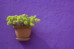 Flower in a pot Stock Photos