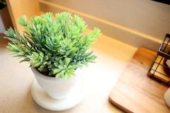 Flower pot and wooden box Royalty Free Stock Photos