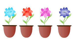 Flower in the pot. Isolated on white stock illustration