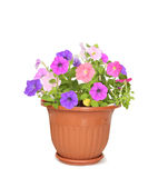 Flower in pot Stock Photos