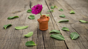 Flower Pot Stock Photo