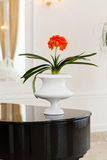 Flower pot. A minimalistic white flowerpot with a vibrant red flower stock images