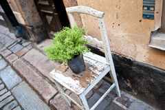 A flower pot on an old chair on a street Royalty Free Stock Photos