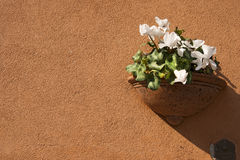 Flower Pot on Orange Wall Stock Photo