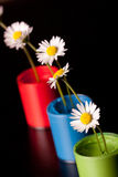Flower Pot with paint Stock Image
