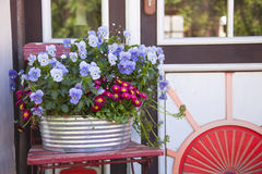 Flower pot with Pansies Stock Images