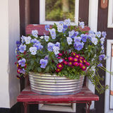 Flower pot with Pansies Royalty Free Stock Photography