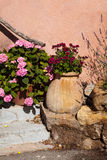Flower pot in Provence Stock Images