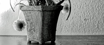 Flower pot puffy flowers black and white with contemporary art design Stock Image