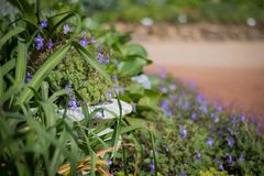 Flower pot and purple flower. Background image stock photo