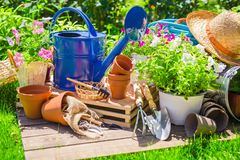 Flower Pot with red flowers and gardening utensils Stock Photos