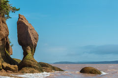 Flower Pot Rock formations at the Hopewell Rocks Royalty Free Stock Photo