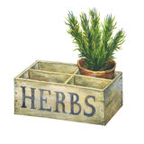 Flower pot with rosemary in an old wooden crate garden. Hand drawn watercolor painting on white background Stock Photos