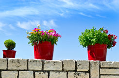 Flower pot with sea background Stock Images